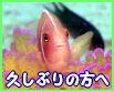 サムイ島 リフレッシュ ダイビング