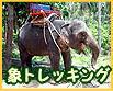 サムイ島 エレファントトレッキングツアー